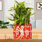 send  3 layer bamboo plant n kitkat chocolate delivery
