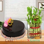 send lucky bamboo plant and half kg chocolate cake round shape delivery