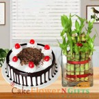 send lucky bamboo plant and half kg black forest cake delivery