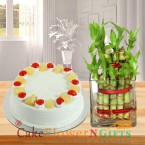 send lucky bamboo plant and half kg pineapple cake delivery