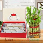 send lucky bamboo plant and half kg kaju barfi delivery