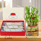 send lucky bamboo plant and 1 kg kaju barfi delivery