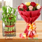 send lucky bamboo plant and mix roses delivery