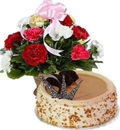 Butterscotch Cake Half Kg N Carnations Basket