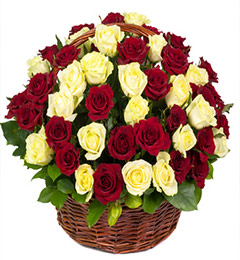 50 White n Red Roses